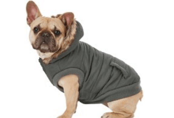 4 Cute, Yet Practical Clothes Your Frenchie Will Love